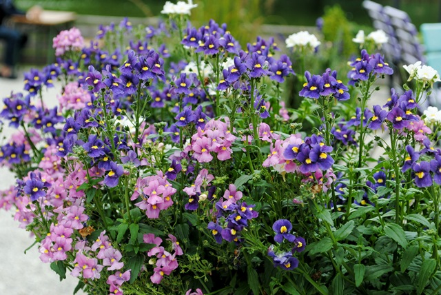 Blumen in blau und lila