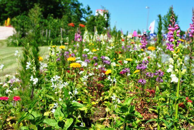 Gartenschau Blumenbeet