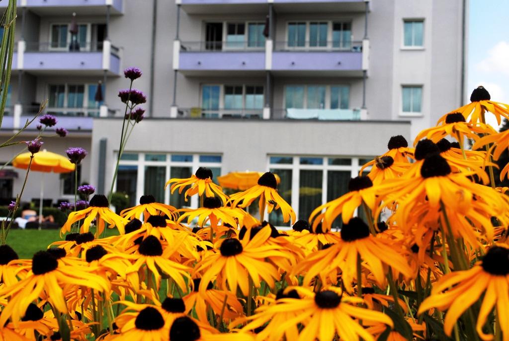 im Garten hinter dem Hotel